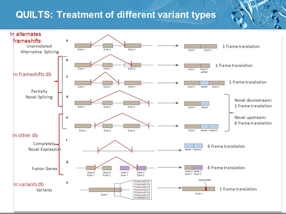 QUILTS: Treatment of different variant types