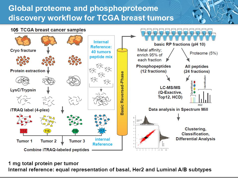Global proteome and phosphoproteome