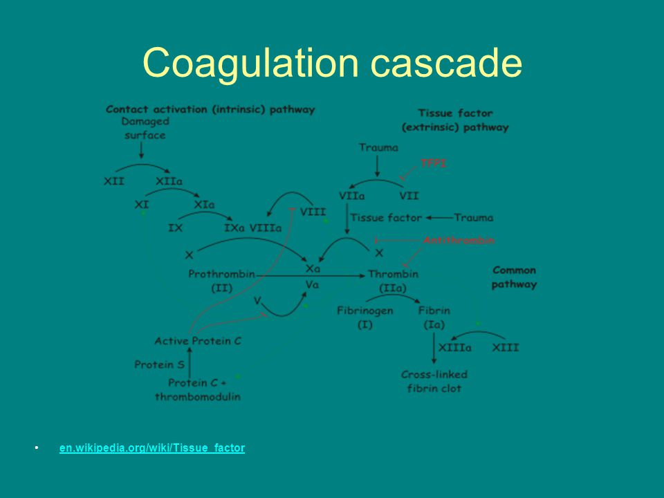 Coagulation cascade en.wikipedia.org/wiki/Tissue_factor