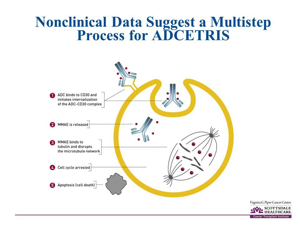 Nonclinical Data Suggest a Multistep Process for ADCETRIS
