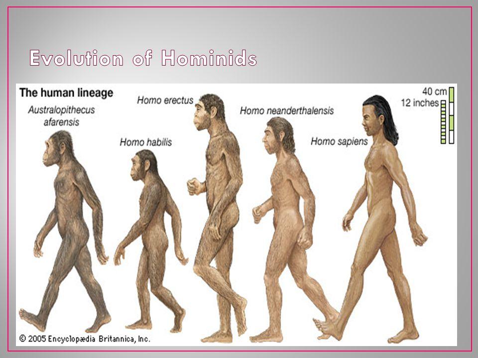 Evolution of Hominids