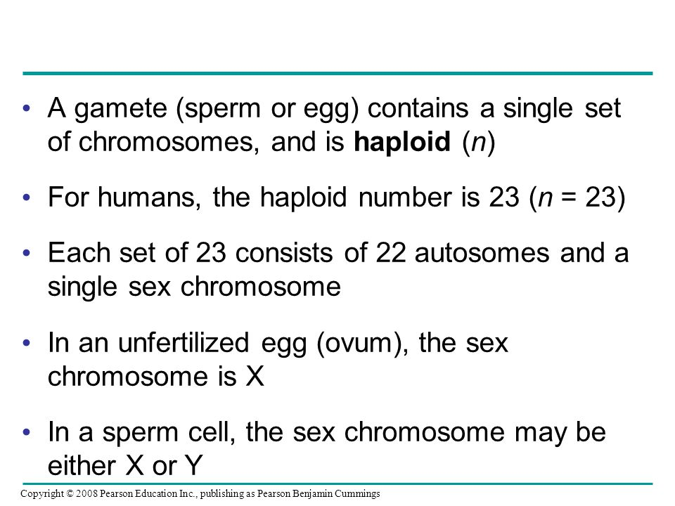 For humans, the haploid number is 23 (n = 23)