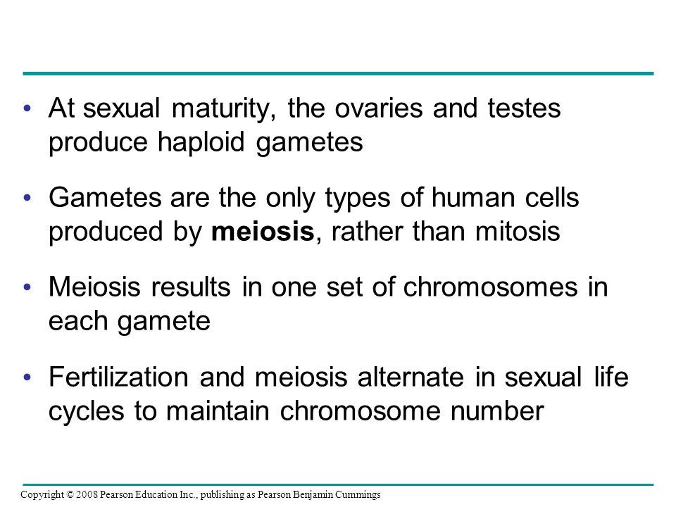 At sexual maturity, the ovaries and testes produce haploid gametes