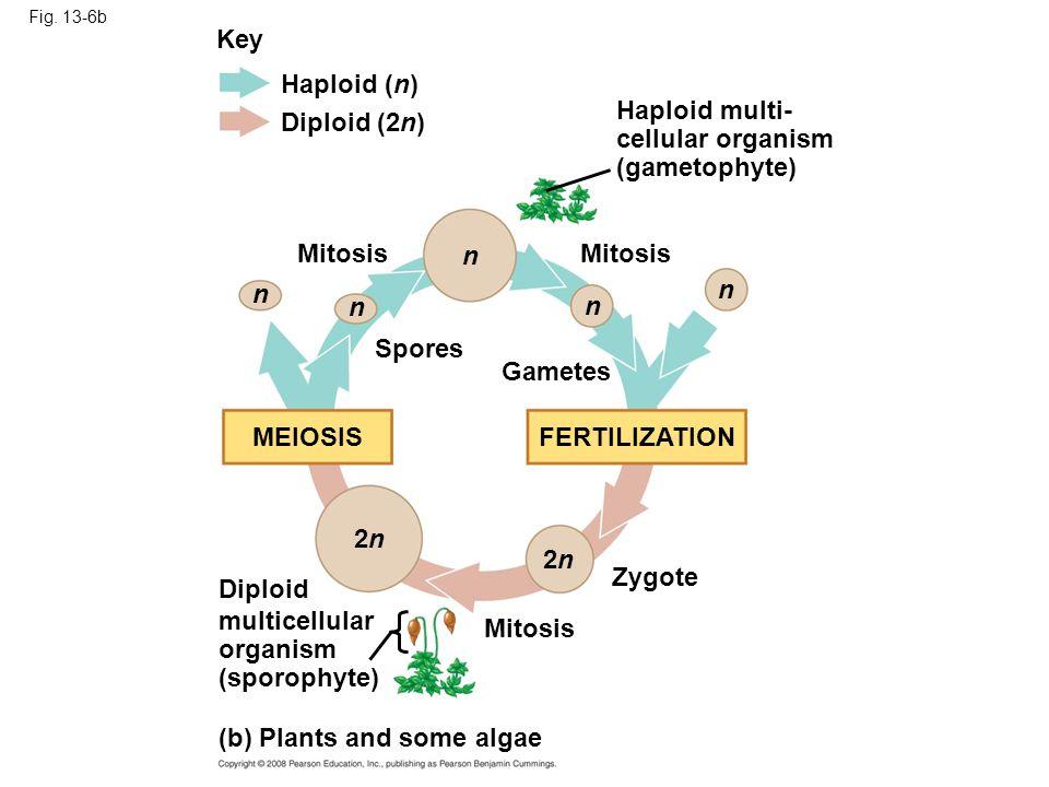 (b) Plants and some algae