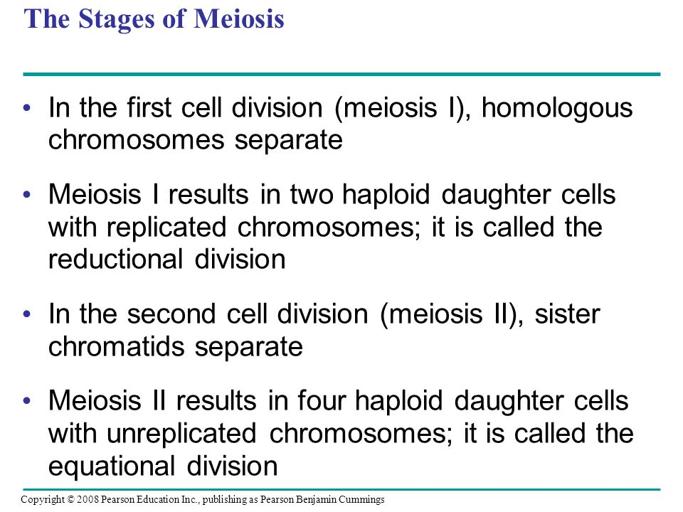 In the second cell division (meiosis II), sister chromatids separate