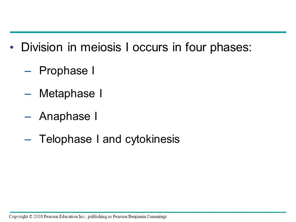 Division in meiosis I occurs in four phases: