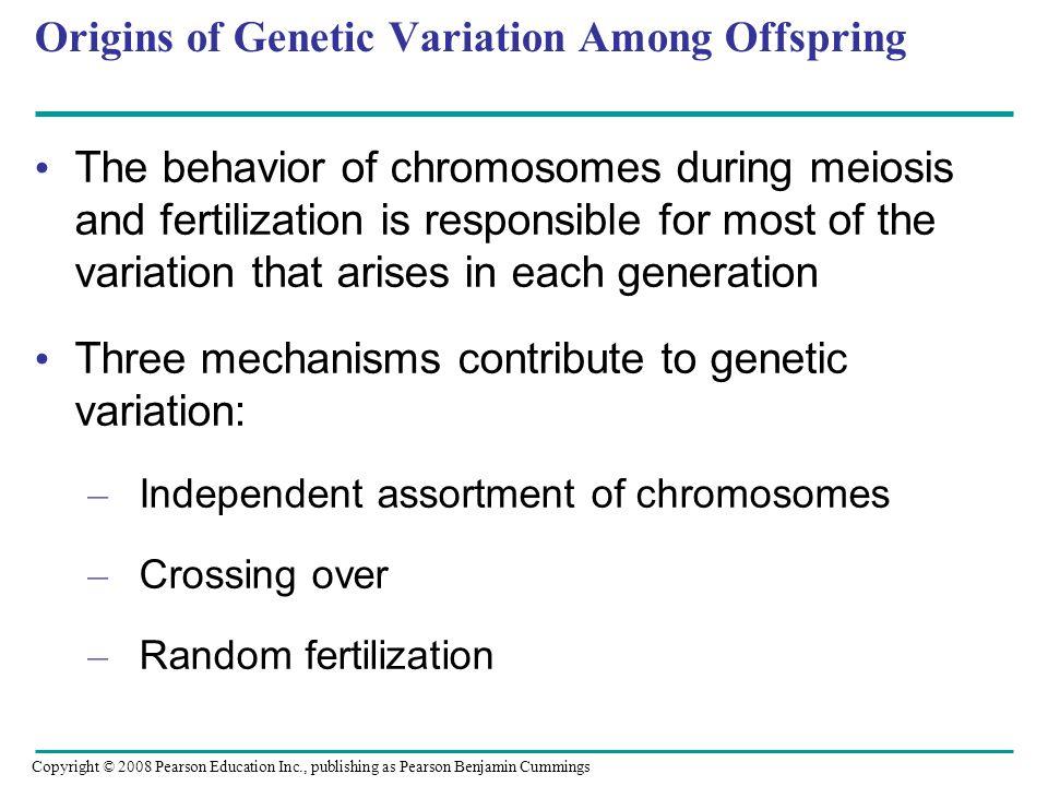 Origins of Genetic Variation Among Offspring