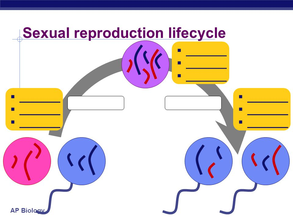 Sexual reproduction lifecycle