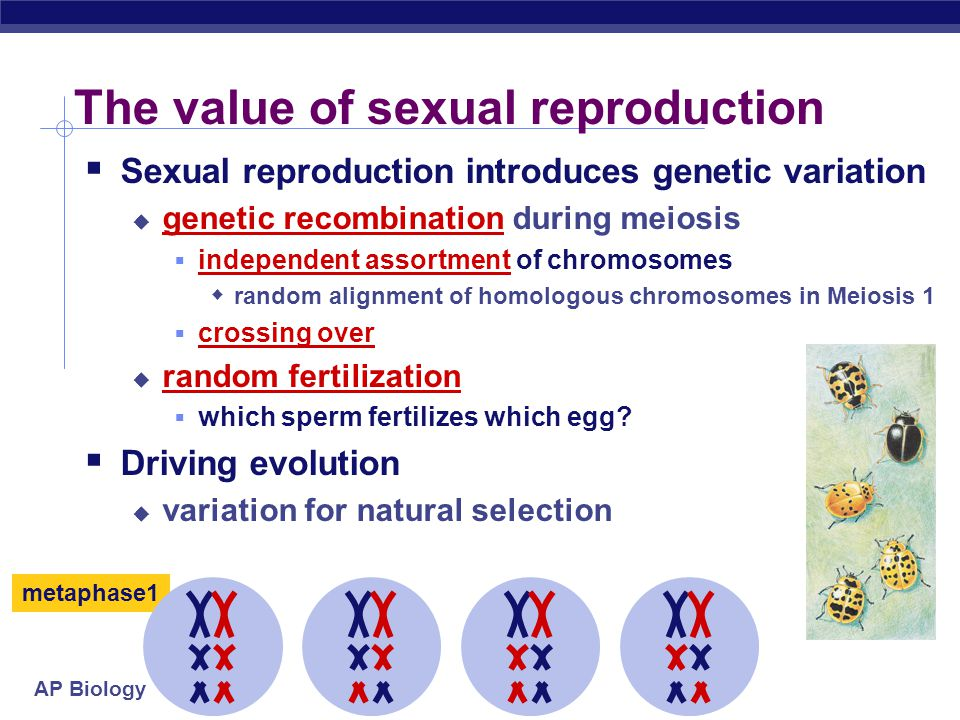 The value of sexual reproduction