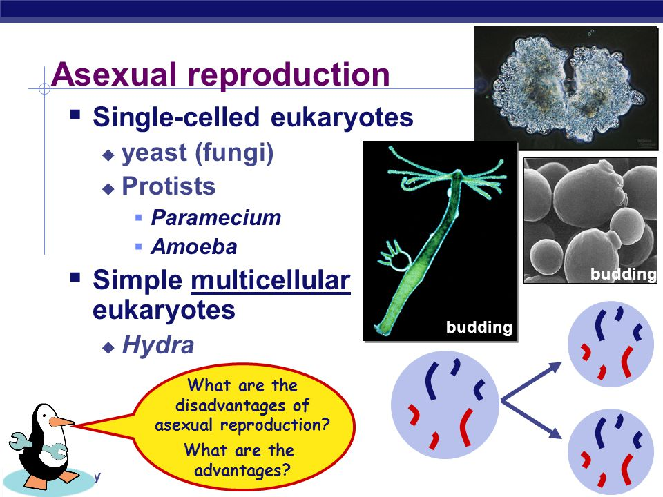 Asexual reproduction Single-celled eukaryotes