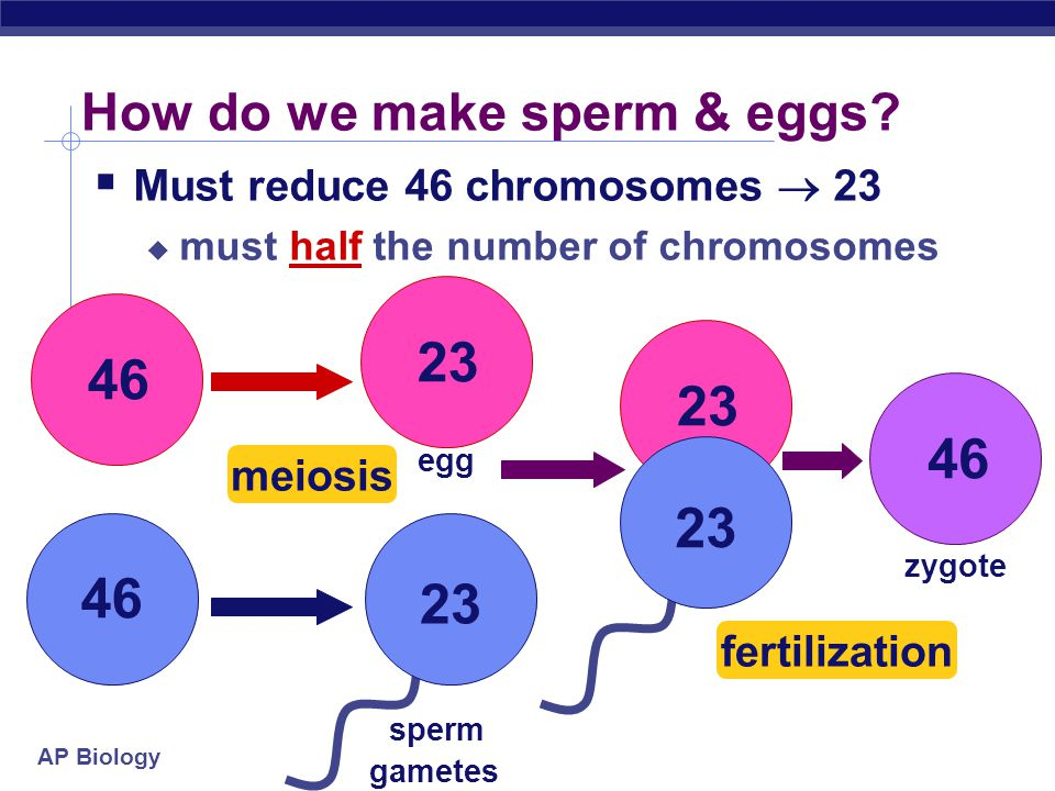 Meiosis & Sexual Reproduction - ppt download