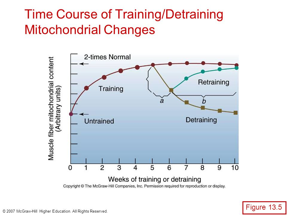 Time Course of Training/Detraining Mitochondrial Changes