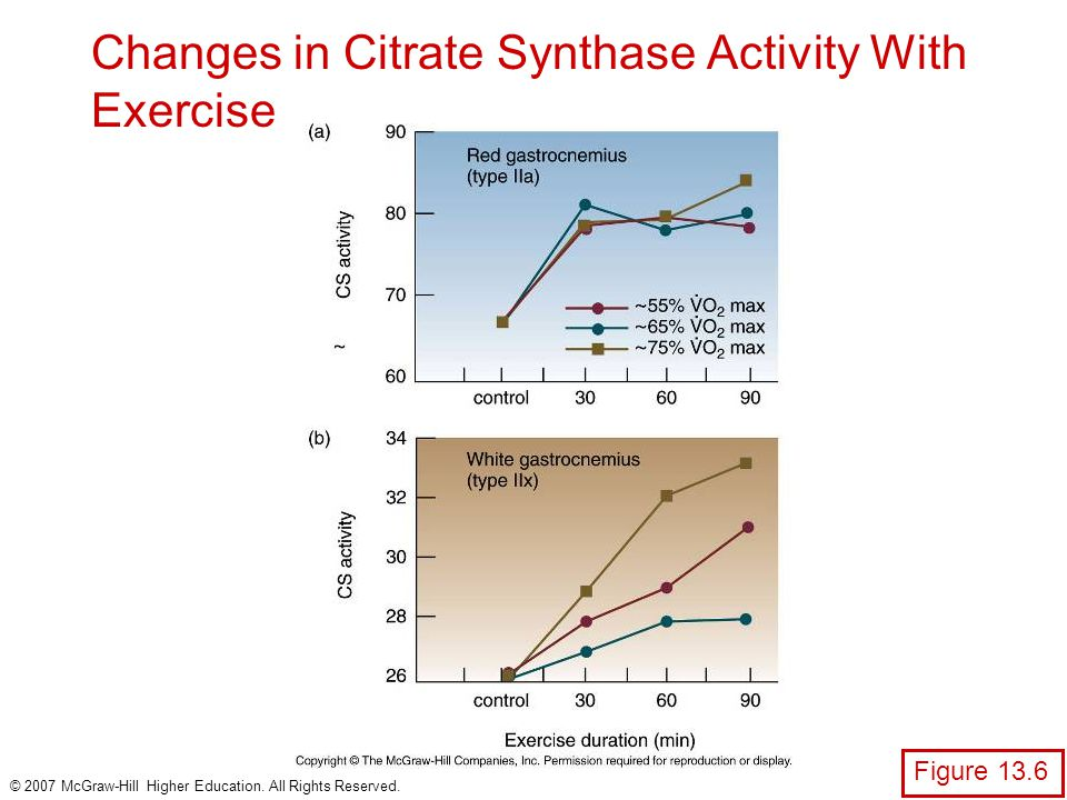 Changes in Citrate Synthase Activity With Exercise