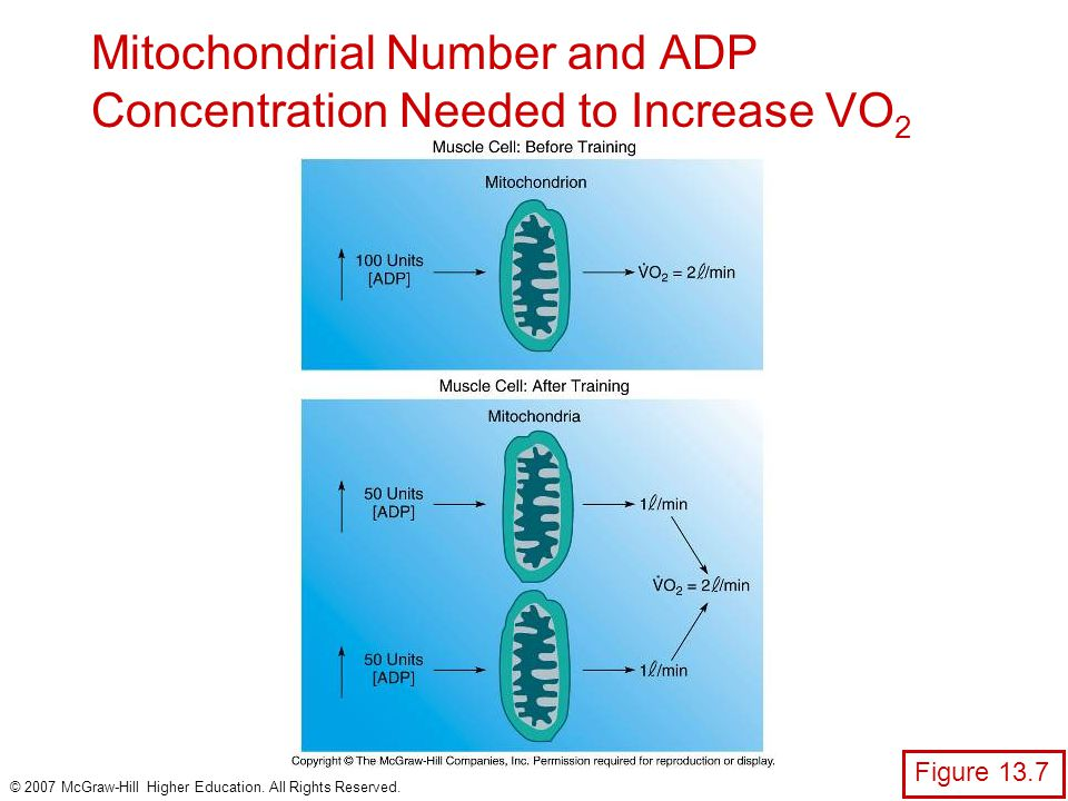 Mitochondrial Number and ADP Concentration Needed to Increase VO2