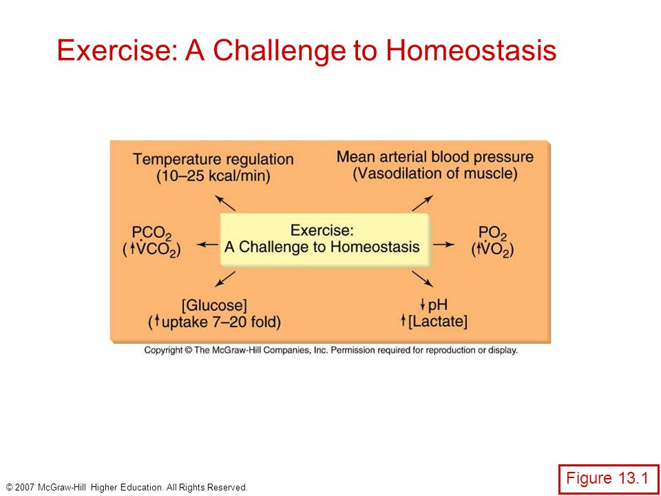 Exercise: A Challenge to Homeostasis