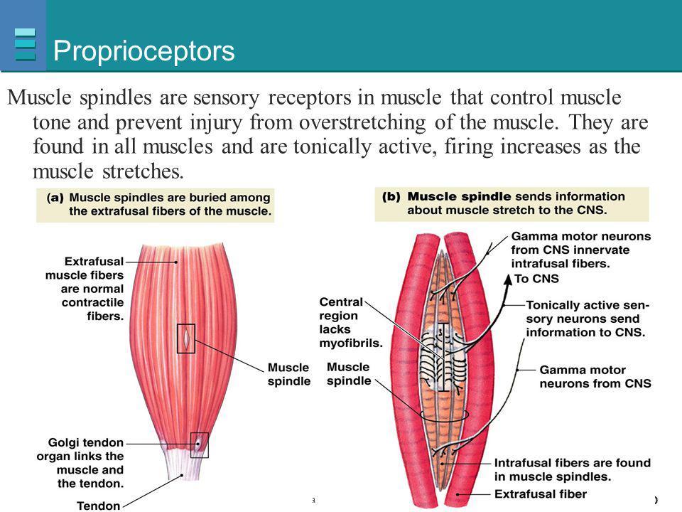 Proprioceptors