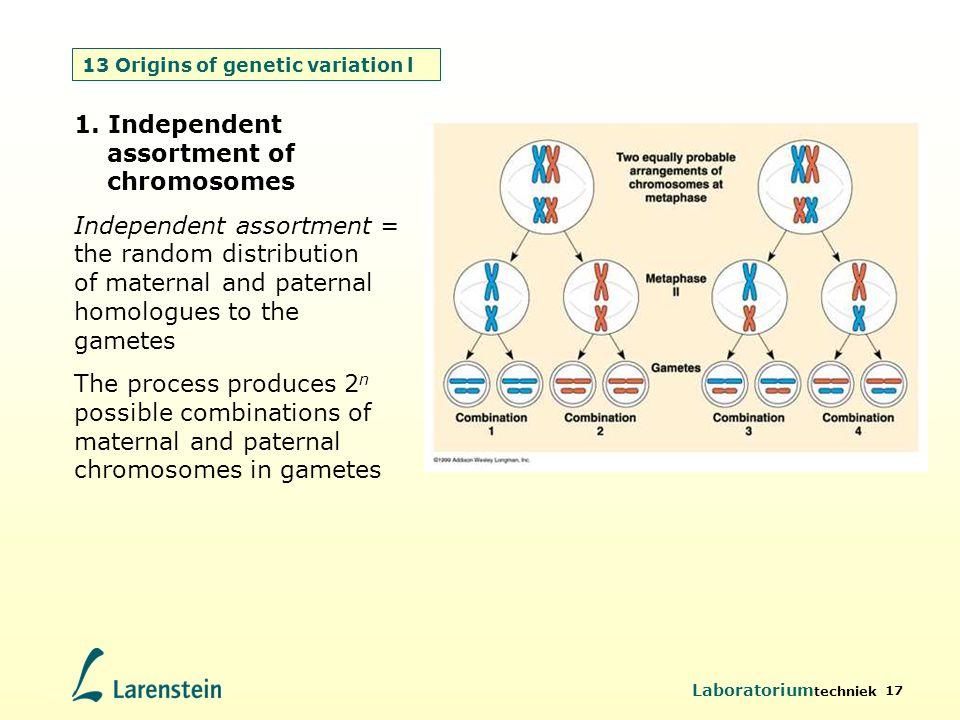 13 Origins of genetic variation l