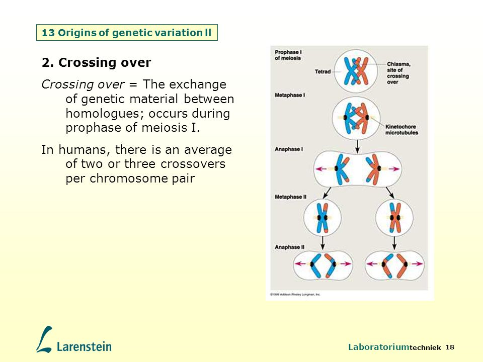 13 Origins of genetic variation ll