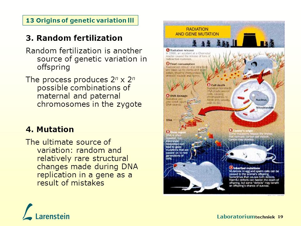 13 Origins of genetic variation lll