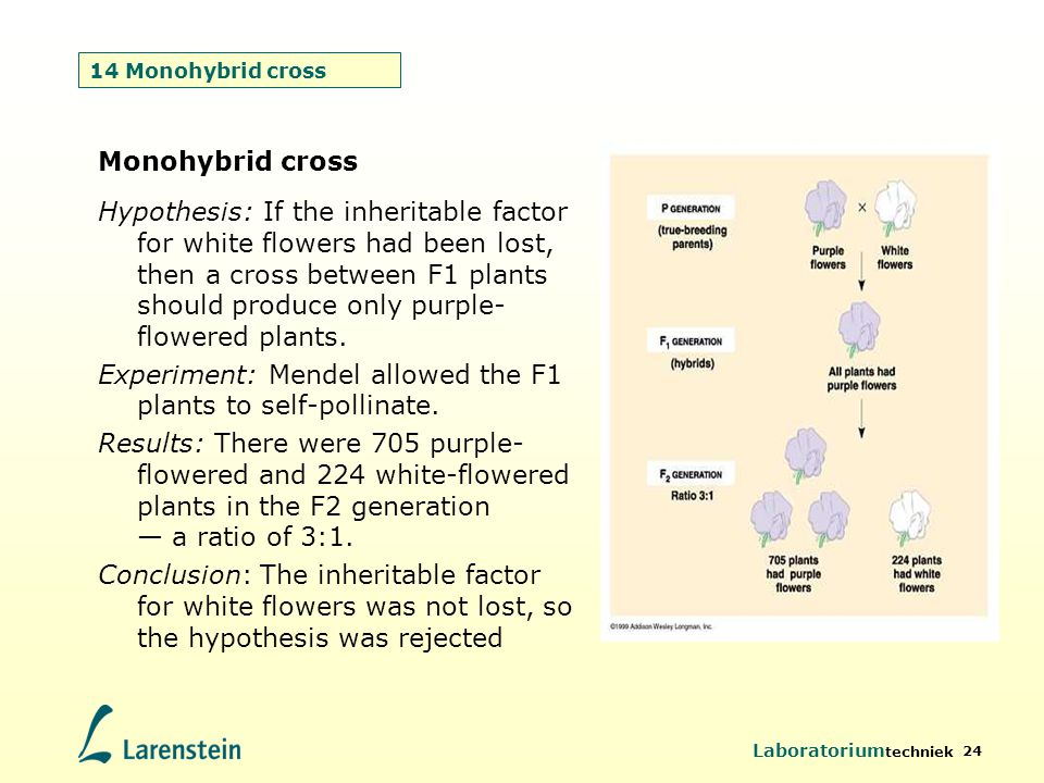 Experiment: Mendel allowed the F1 plants to self-pollinate.