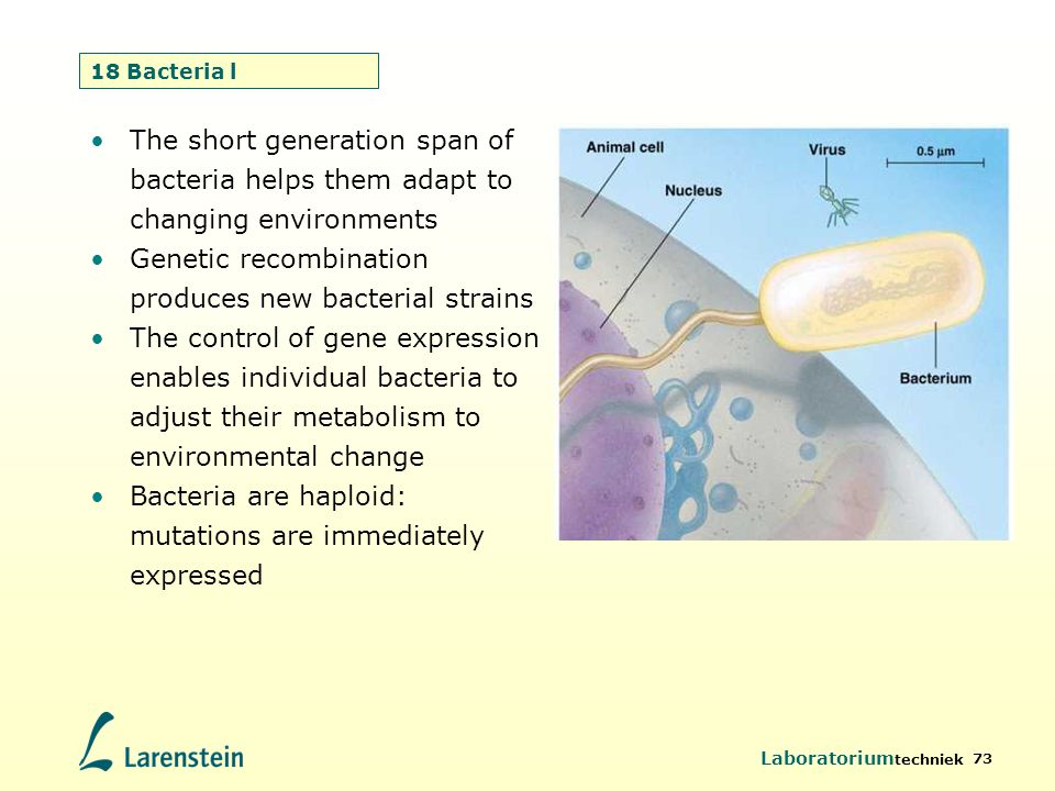 Genetic recombination produces new bacterial strains