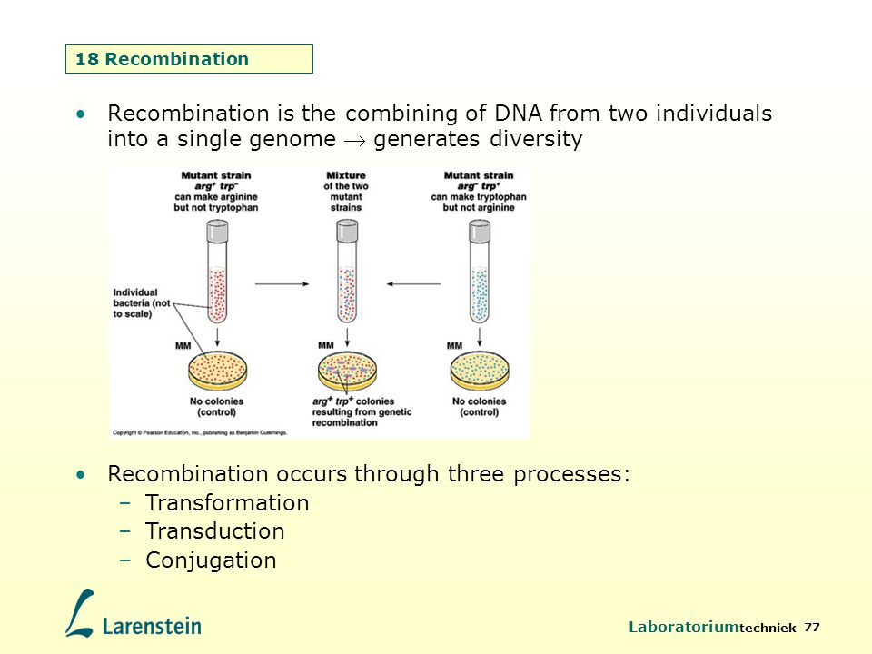Recombination occurs through three processes: Transformation