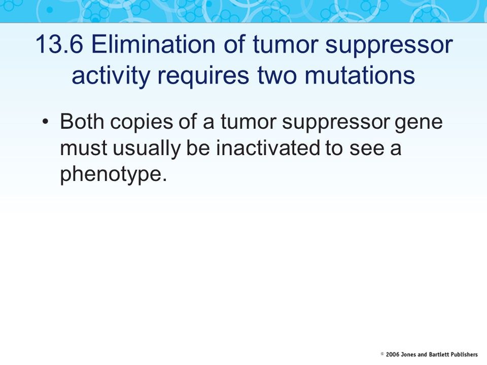 13.6 Elimination of tumor suppressor activity requires two mutations