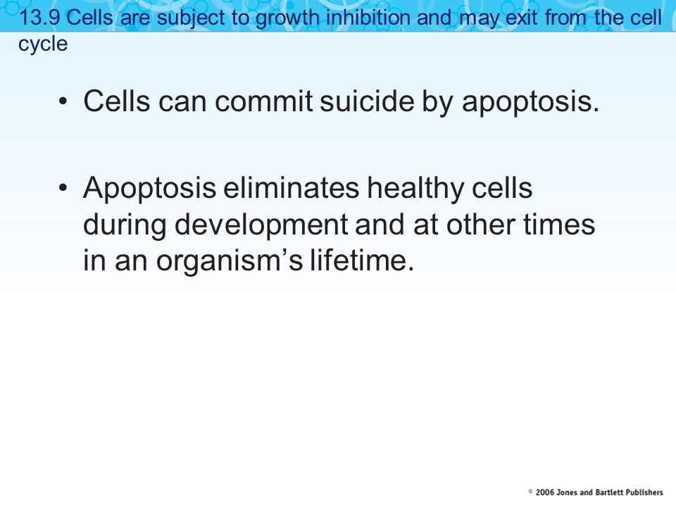 Cells can commit suicide by apoptosis.