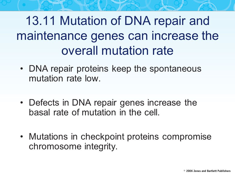 13.11 Mutation of DNA repair and maintenance genes can increase the overall mutation rate