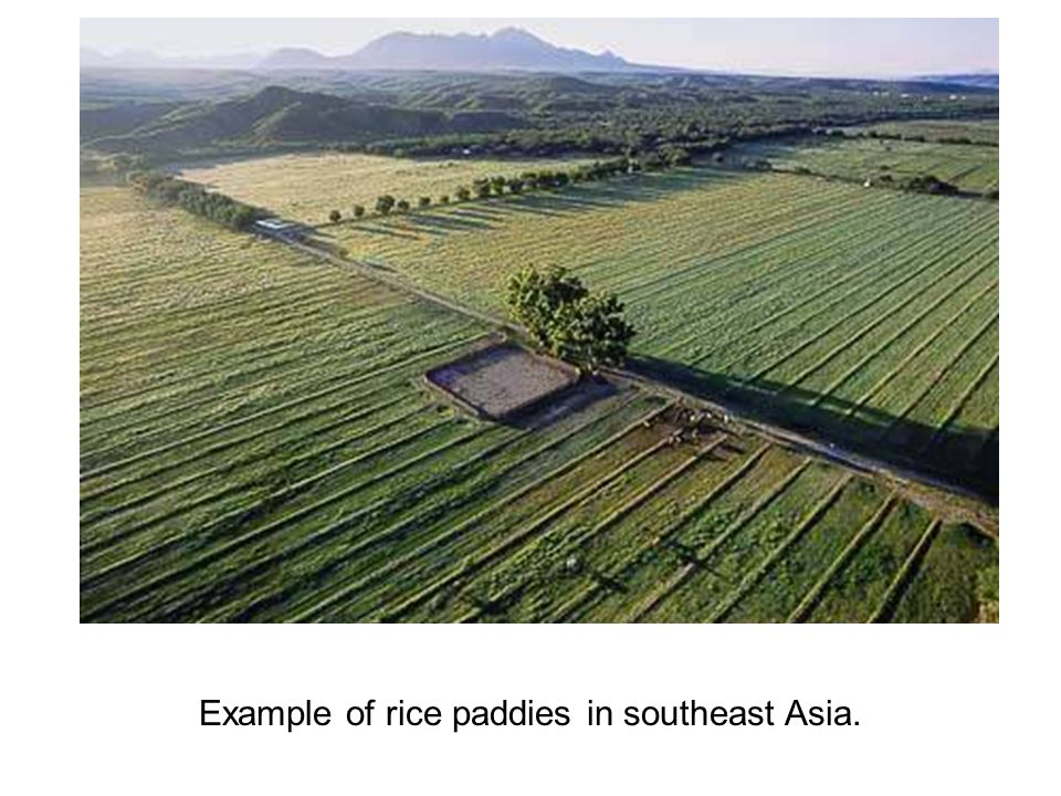 Example of rice paddies in southeast Asia.