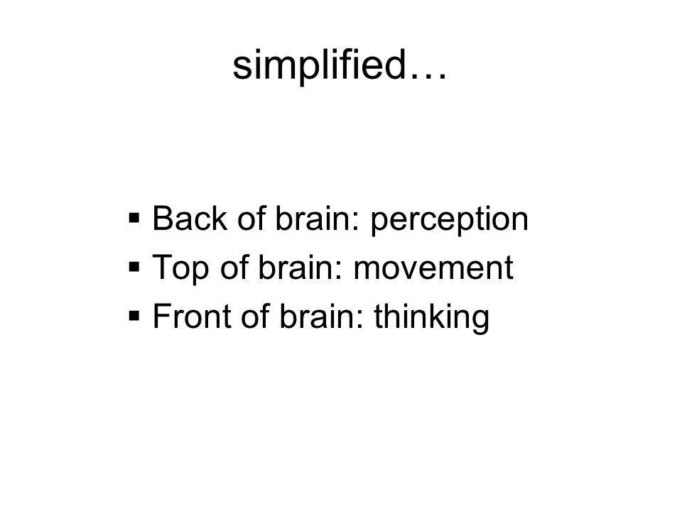 simplified… Back of brain: perception Top of brain: movement