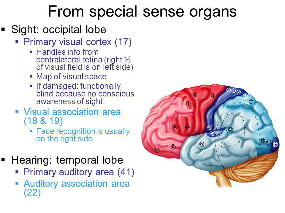 From special sense organs