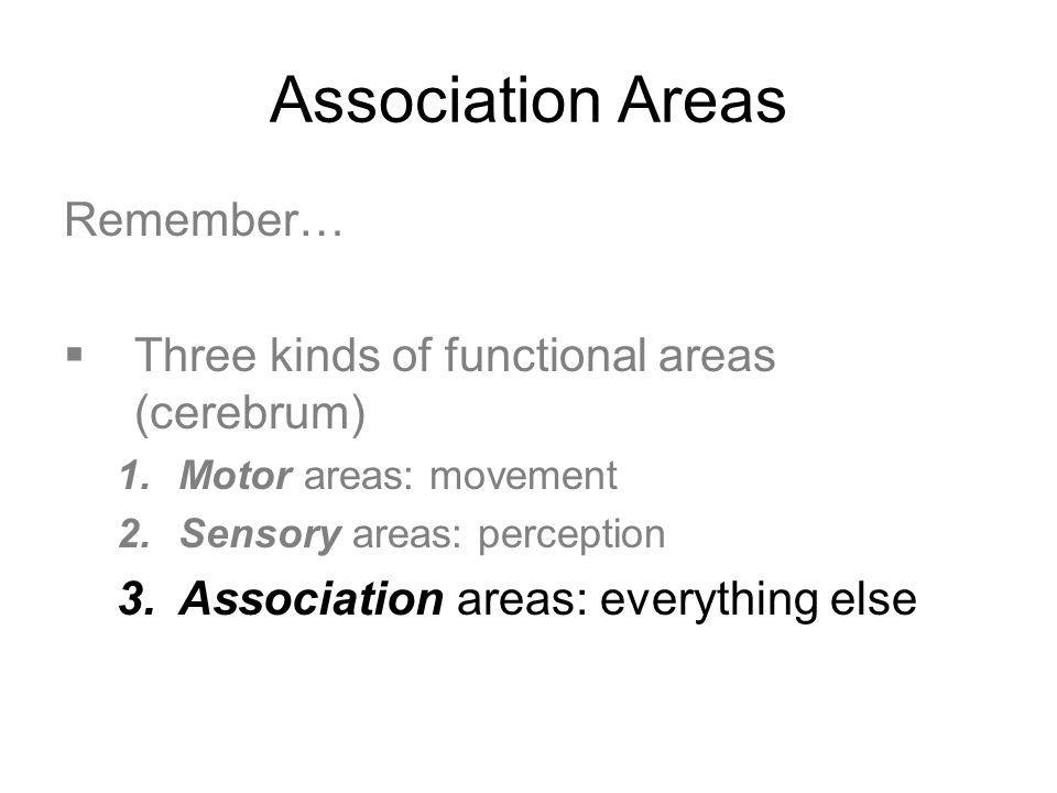 Association Areas Remember… Three kinds of functional areas (cerebrum)