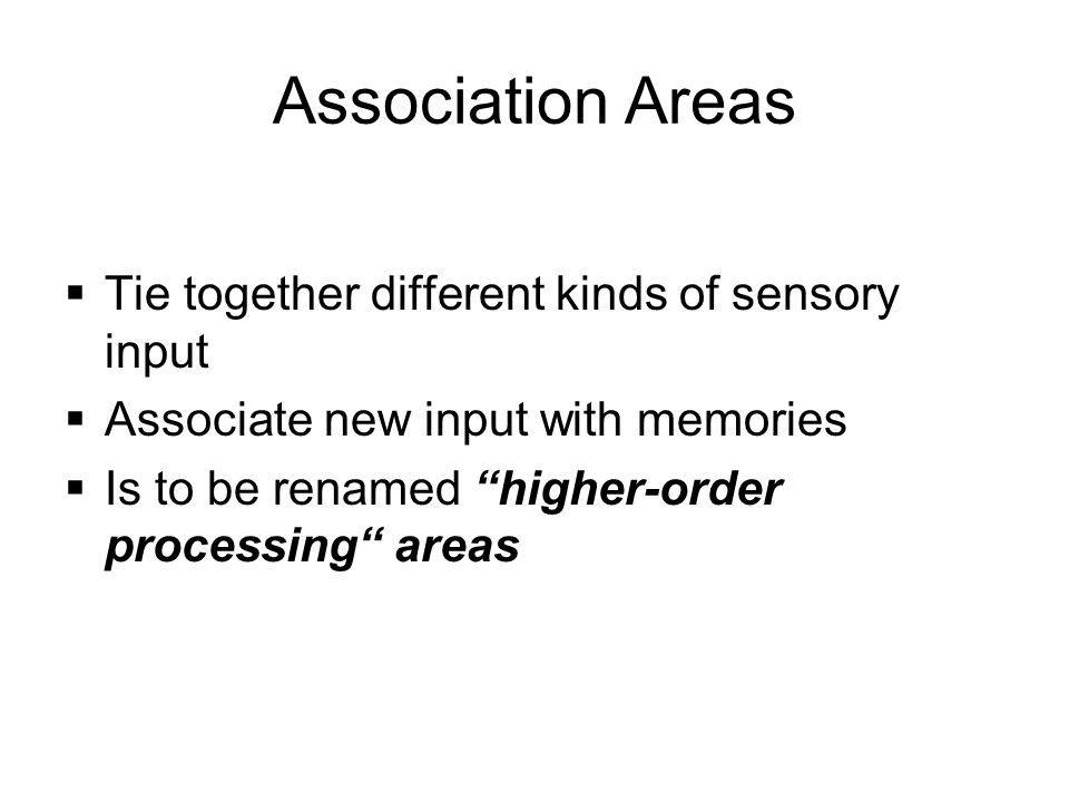Association Areas Tie together different kinds of sensory input