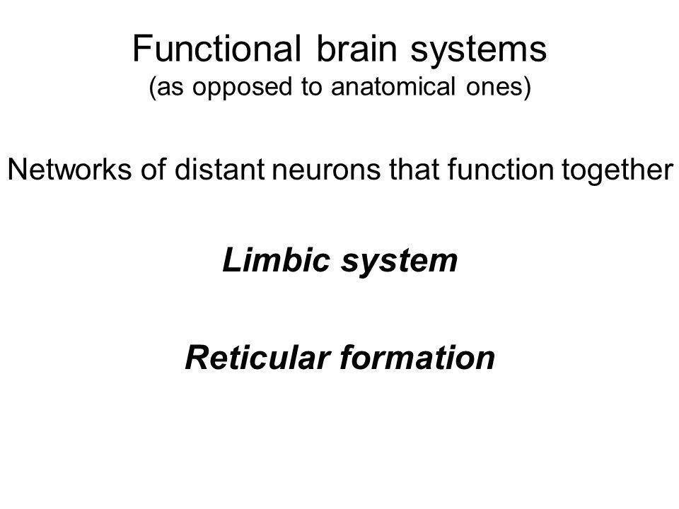 Functional brain systems (as opposed to anatomical ones)