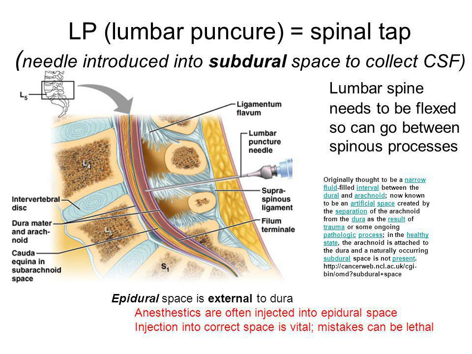 LP (lumbar puncure) = spinal tap (needle introduced into subdural space to collect CSF)