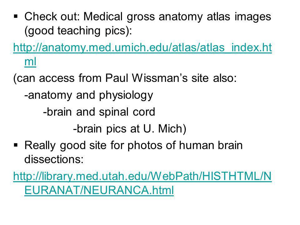 Check out: Medical gross anatomy atlas images (good teaching pics):