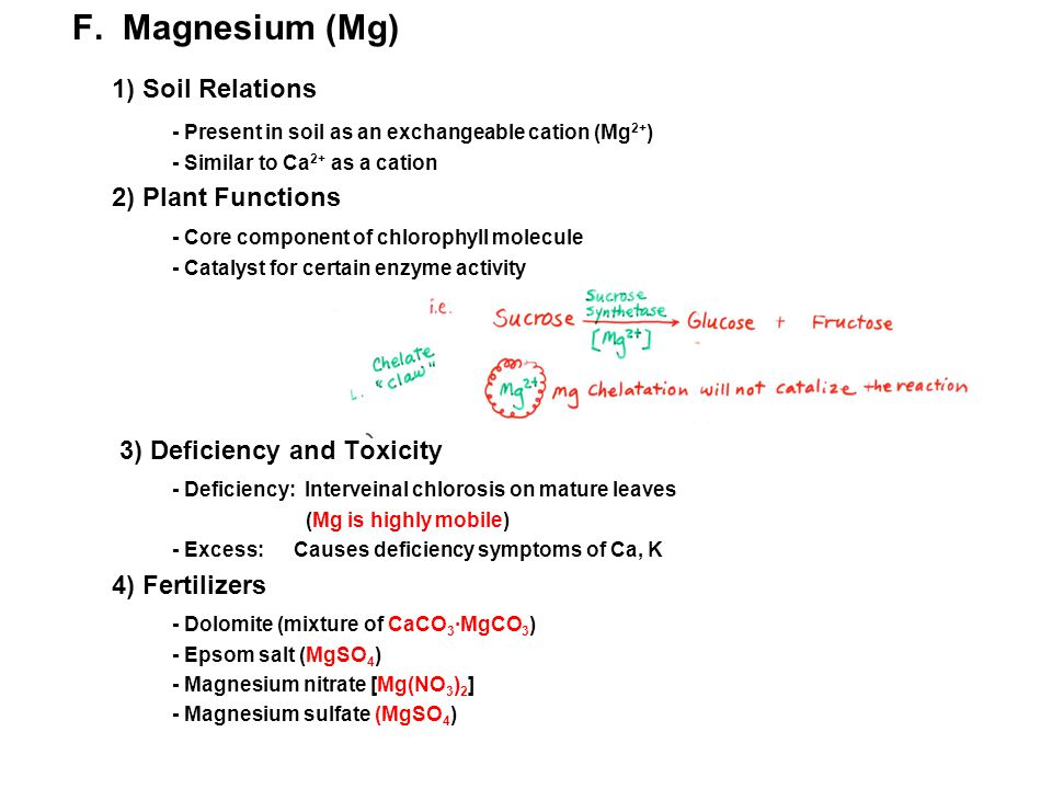 1) Soil Relations F. Magnesium (Mg)
