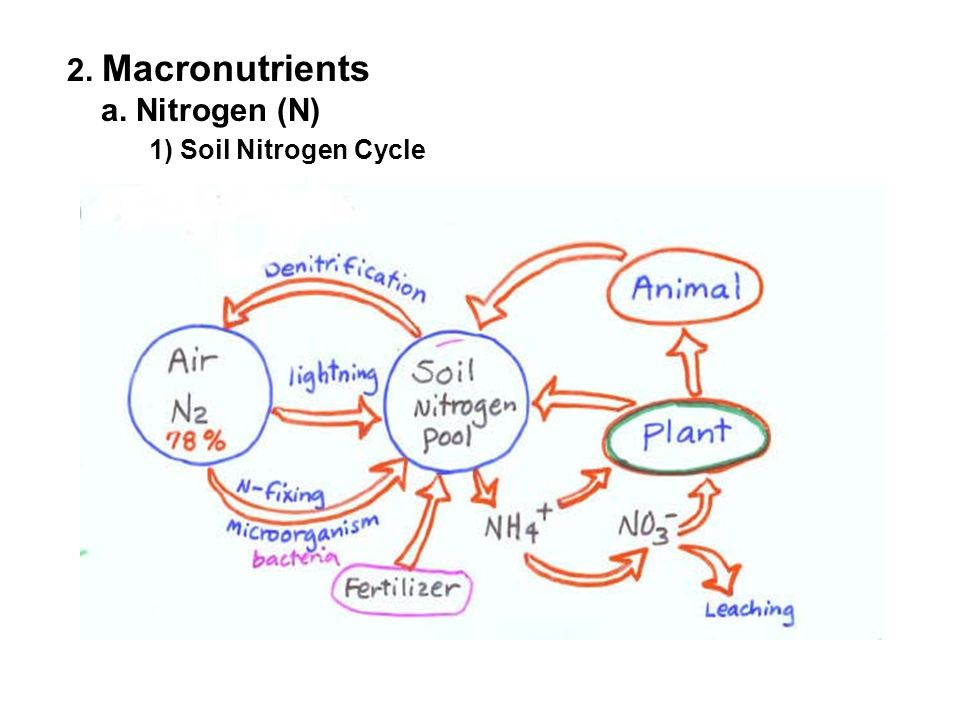2. Macronutrients a. Nitrogen (N) 1) Soil Nitrogen Cycle