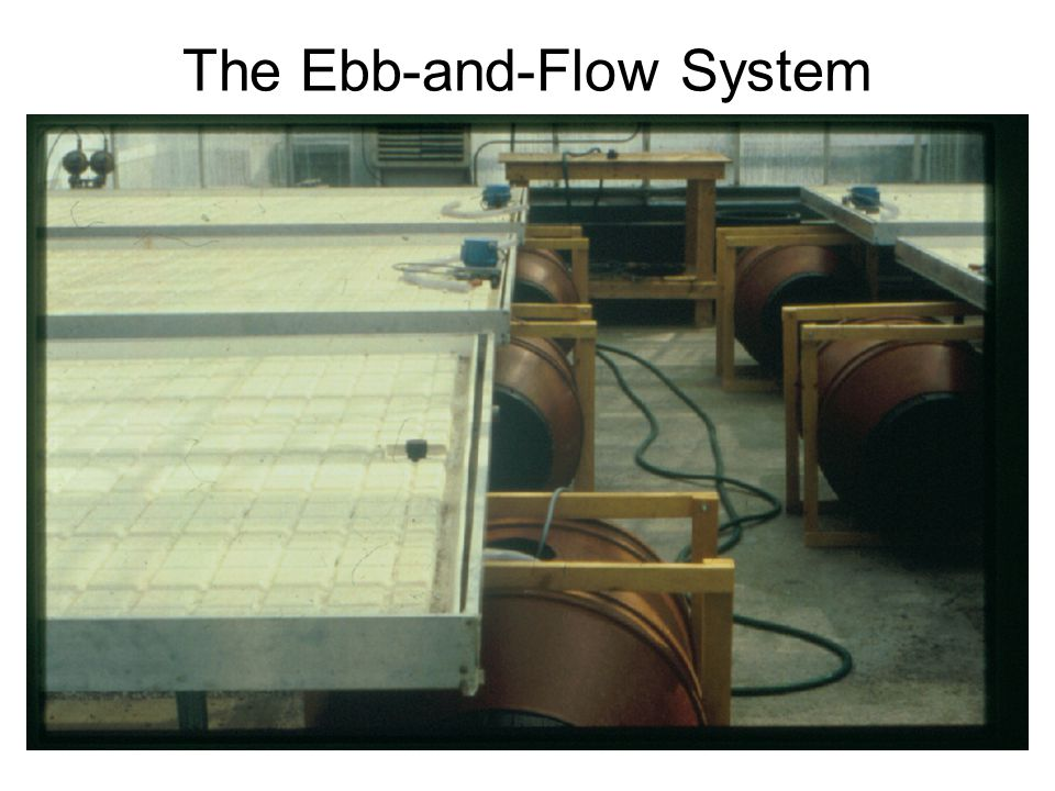 The Ebb-and-Flow System