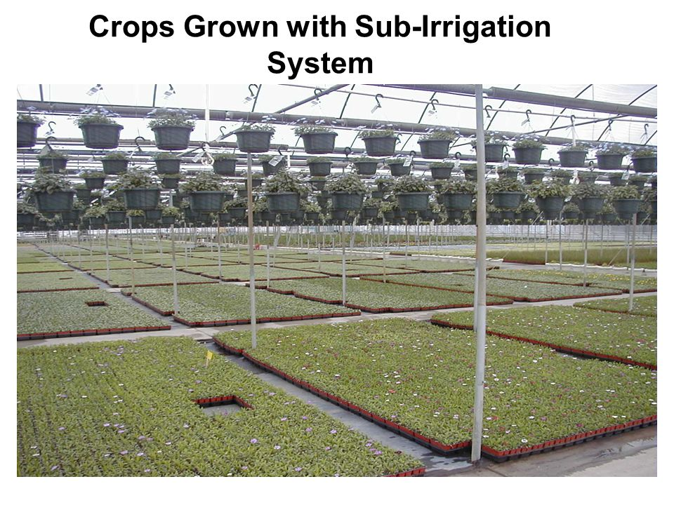 Crops Grown with Sub-Irrigation System