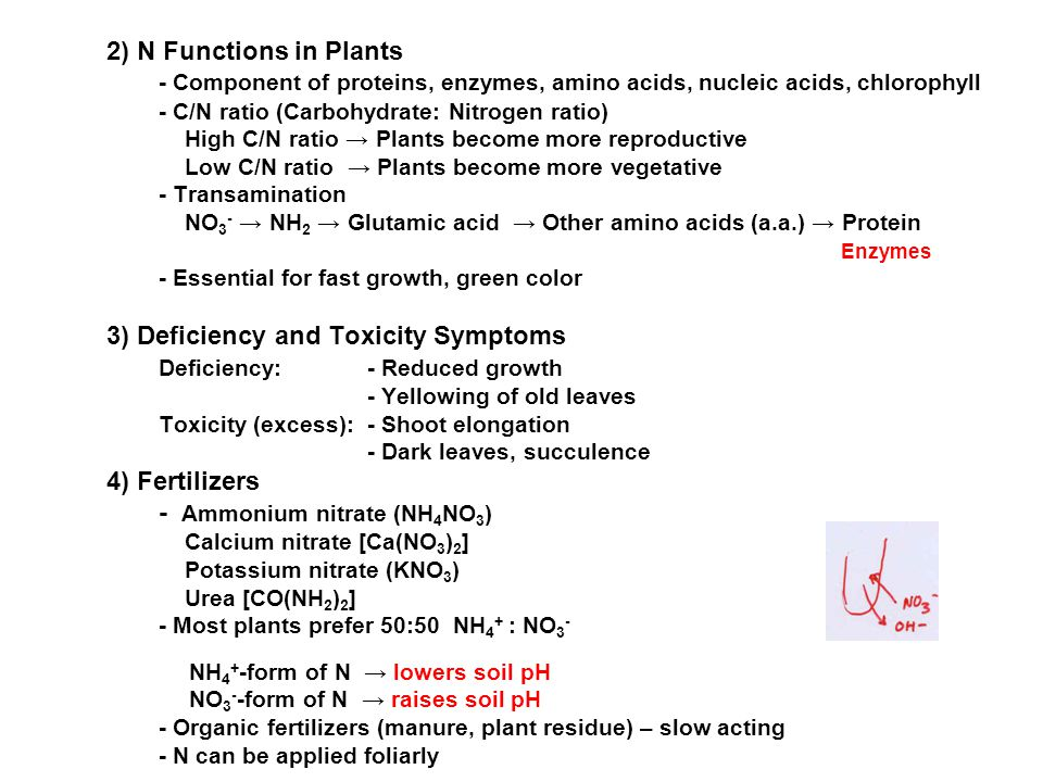 3) Deficiency and Toxicity Symptoms Deficiency: - Reduced growth