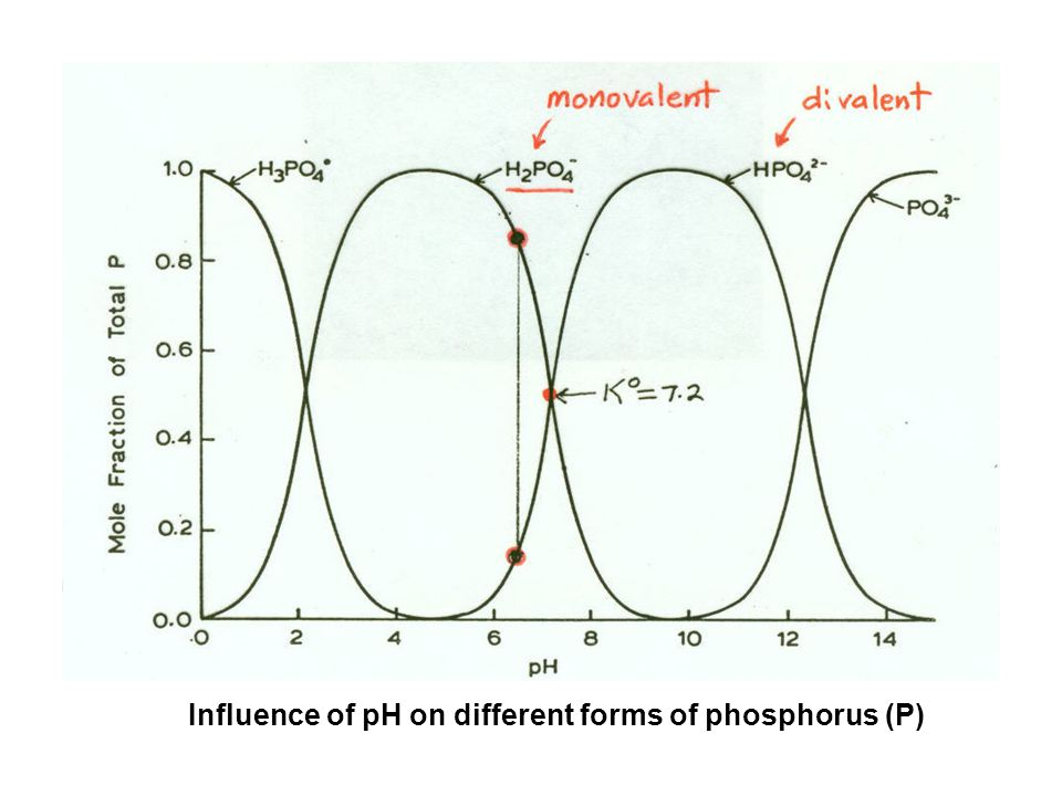 Influence of pH on different forms of phosphorus (P)