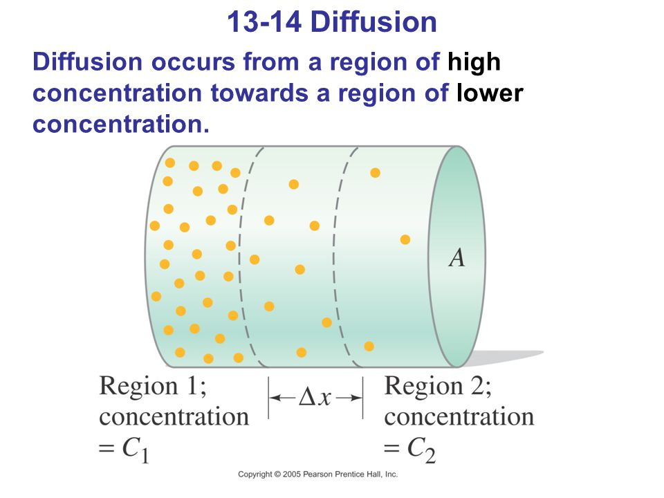 13-14 Diffusion Diffusion occurs from a region of high concentration towards a region of lower concentration.