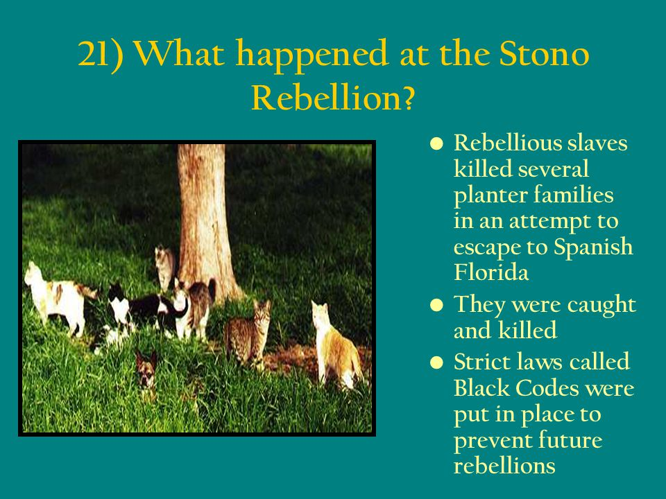 21) What happened at the Stono Rebellion
