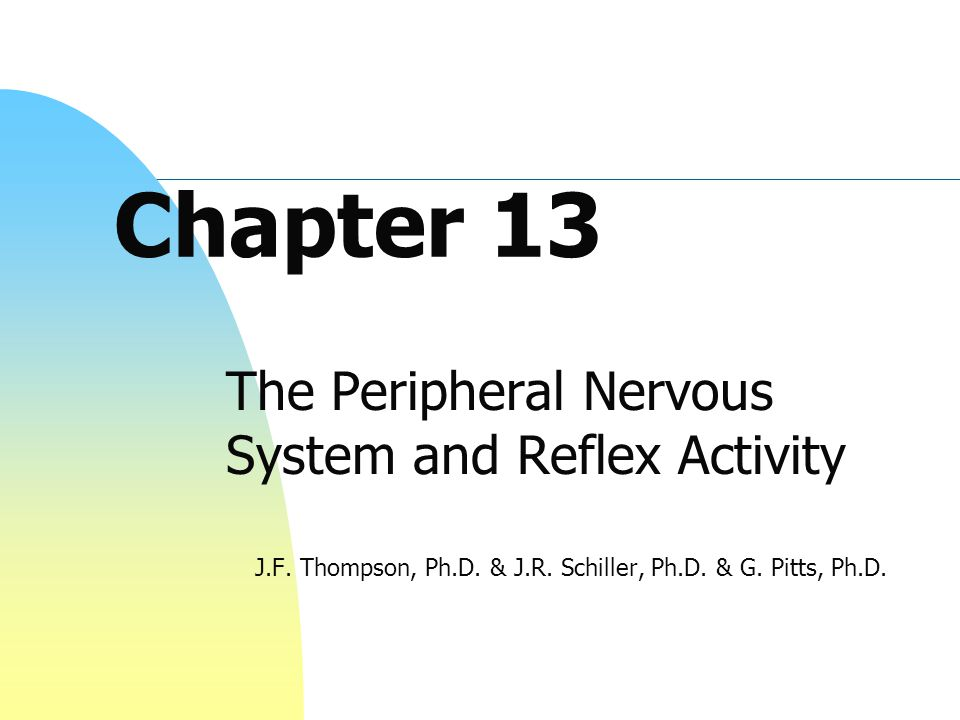 Chapter 13 The Peripheral Nervous System and Reflex Activity