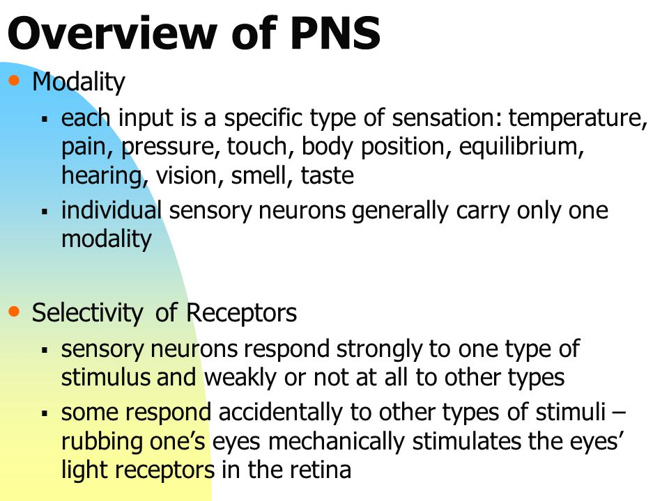Overview of PNS Modality Selectivity of Receptors