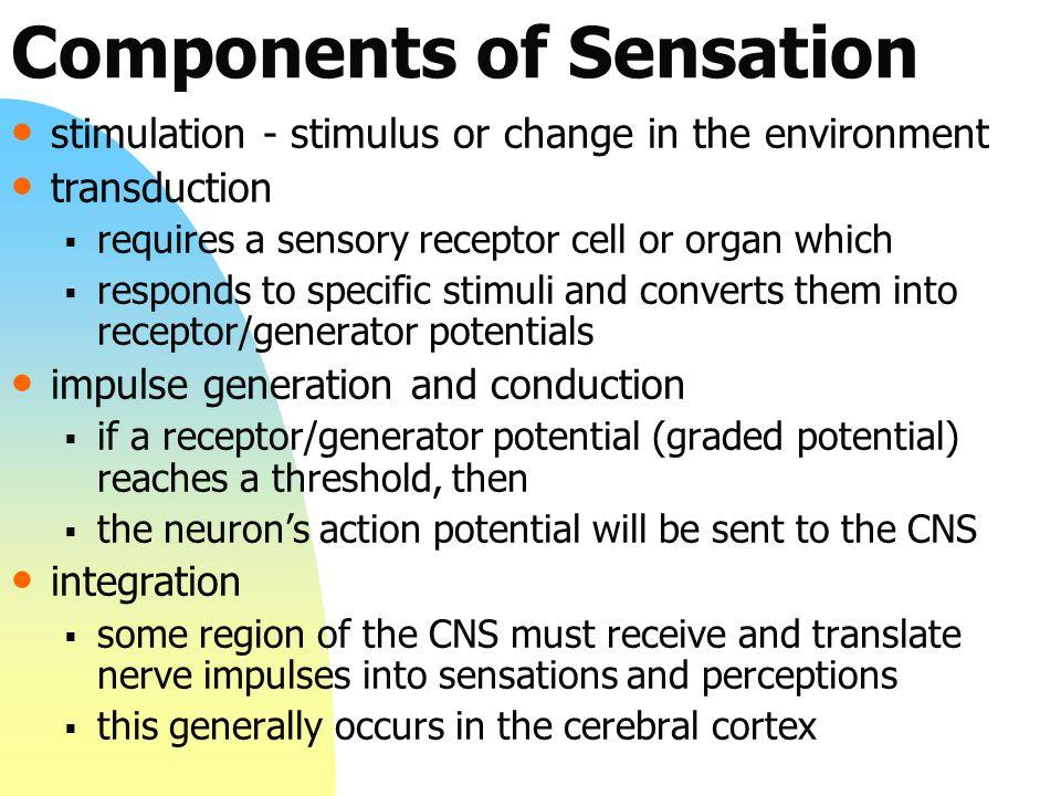 Components of Sensation