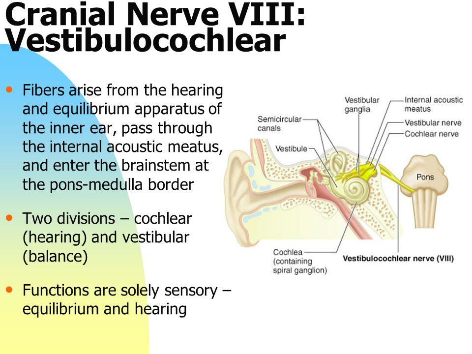 Cranial Nerve VIII: Vestibulocochlear