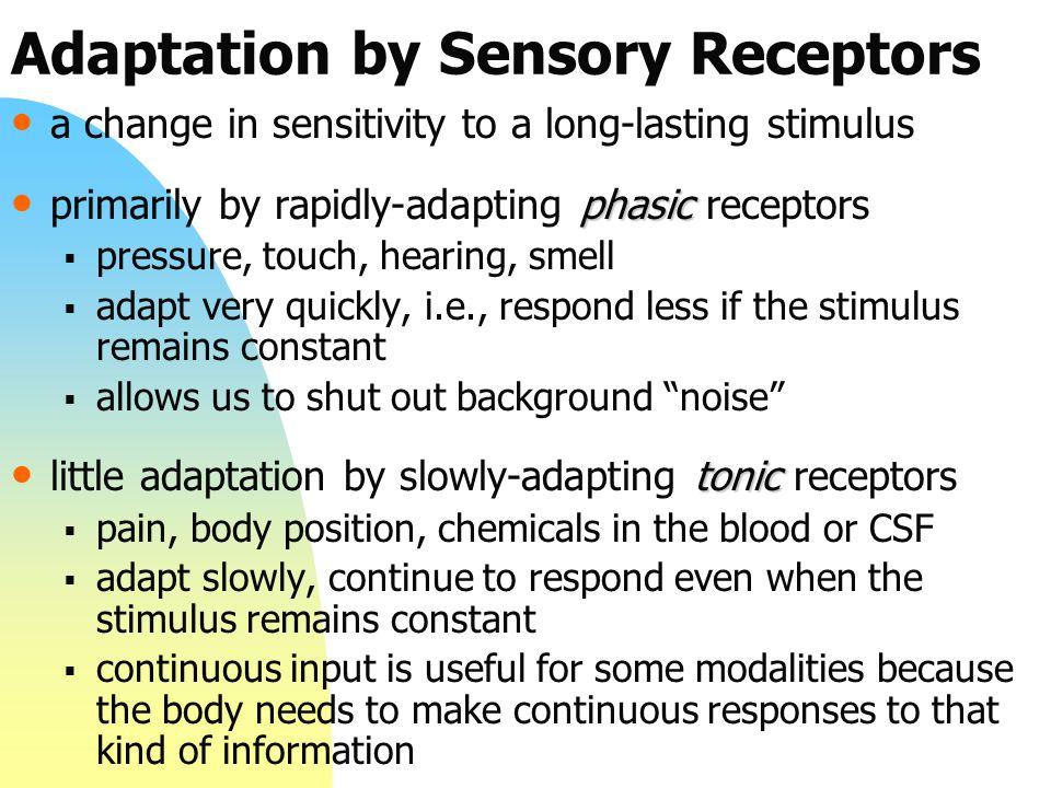 Adaptation by Sensory Receptors